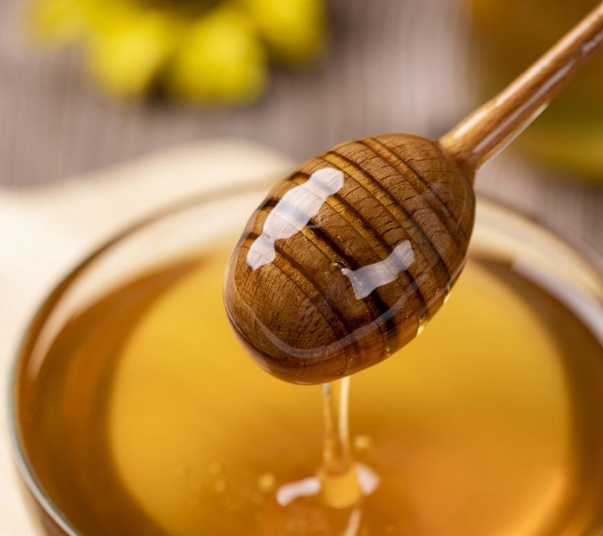 Mel de abelhas sem ferrão é regulamentado em SC
