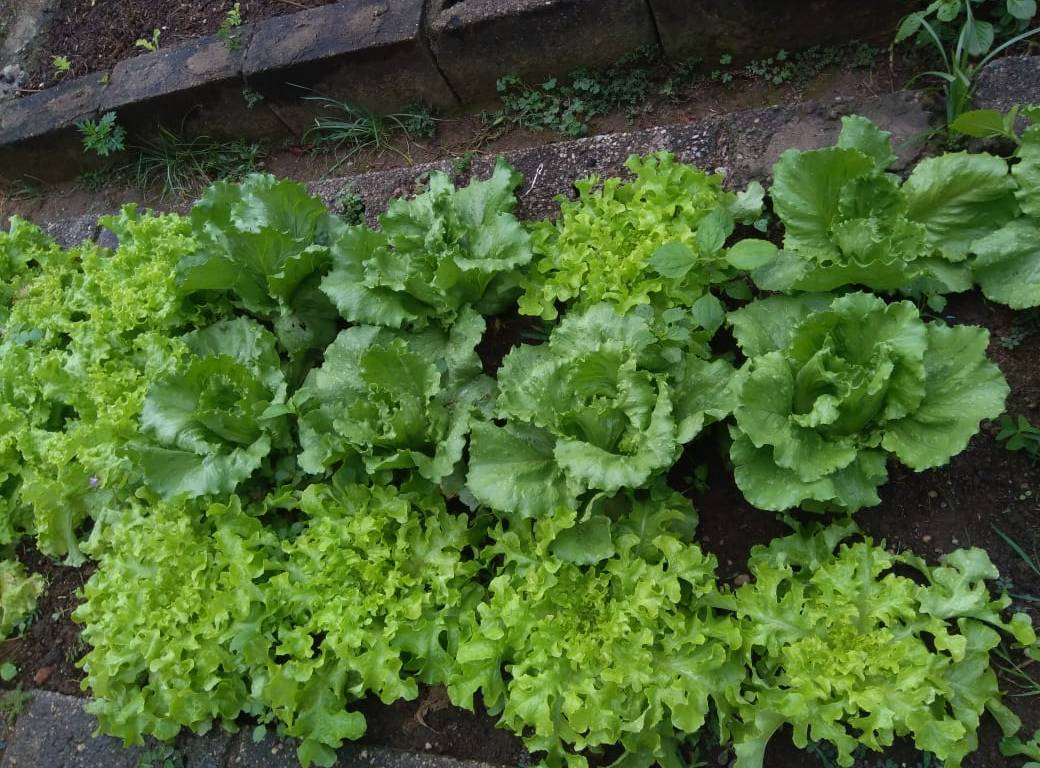Vale do Sonho Hotel ampliará horta orgânica